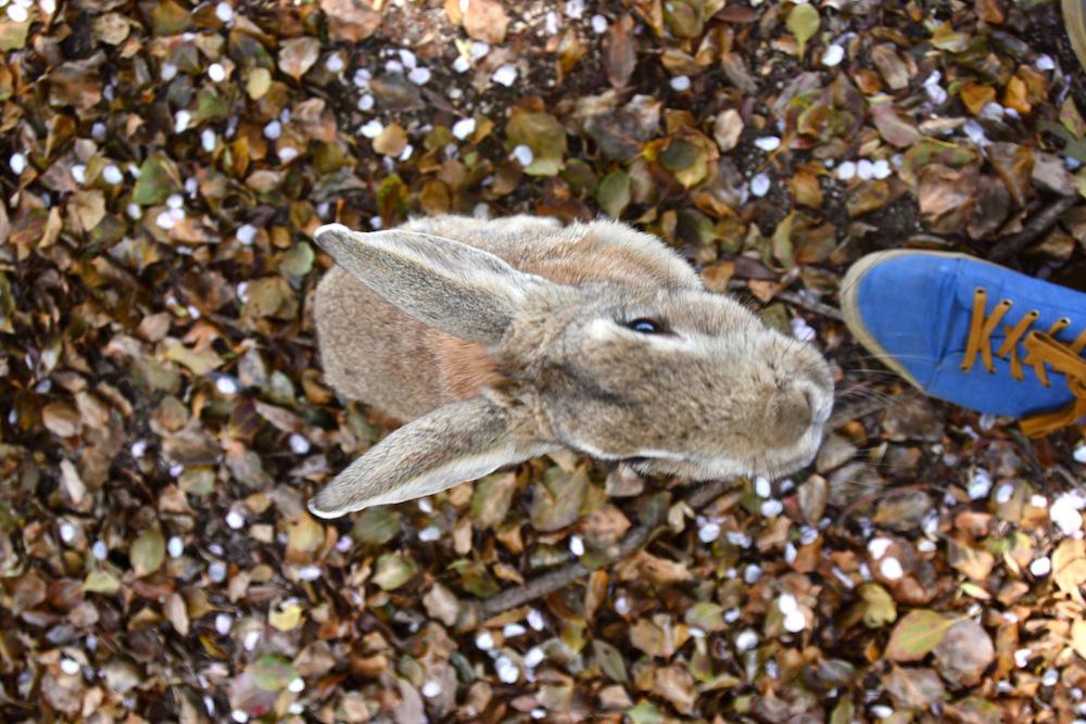 rabbit-island-japan-4